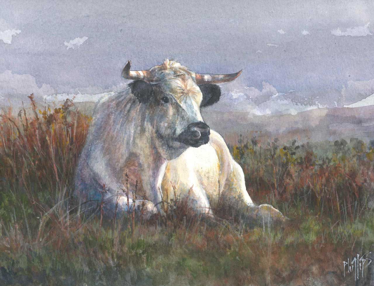 Painting of Chillingham Belle cattle