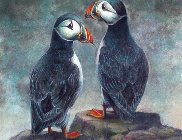Puffin Pairing Faffed